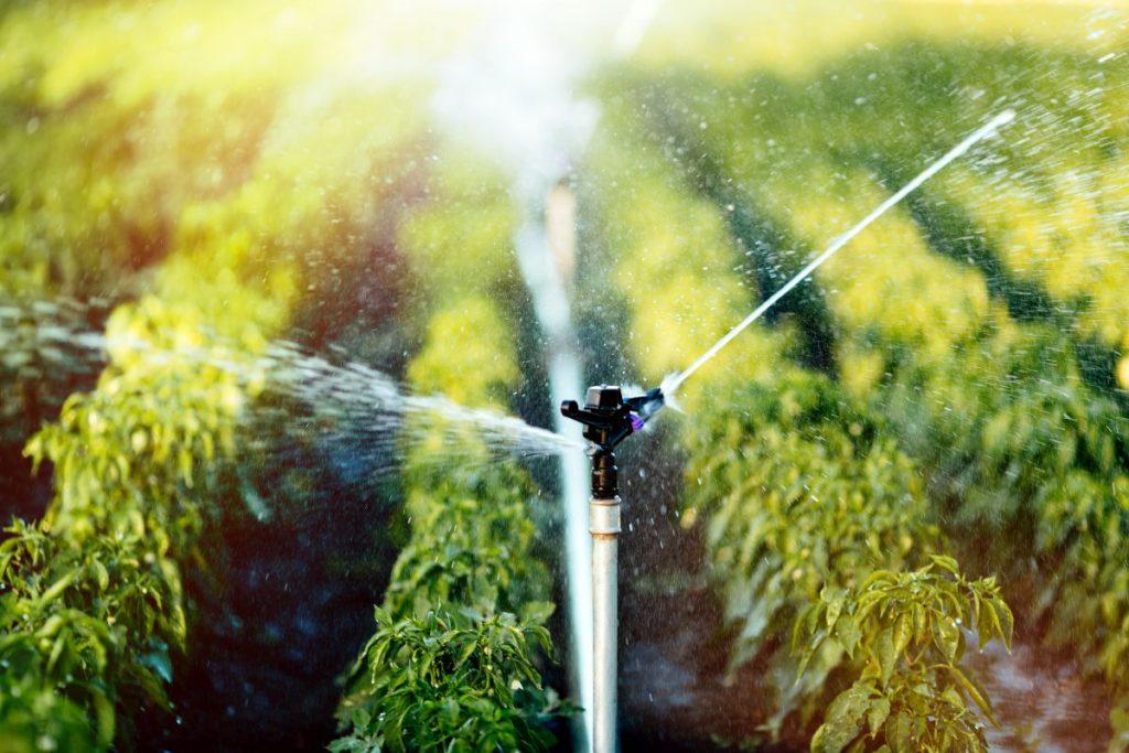 Czy automatyczny system nawadniania, to dobre rozwiązanie?